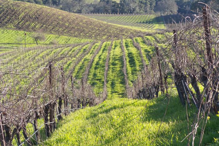 Green vine contours