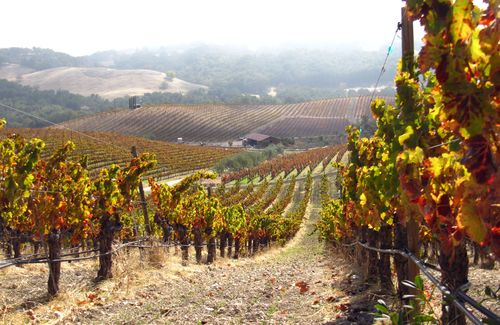 Tablas Creek Vineyard in Autumn