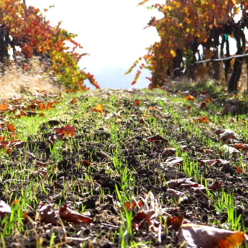 Fall colors and new cover crop 2014