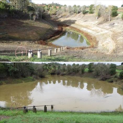 Frick ponds