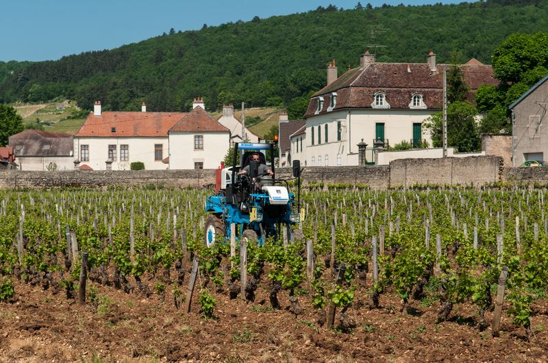 Vineyards_near_Gevrey-Chambertin_(7309858246)