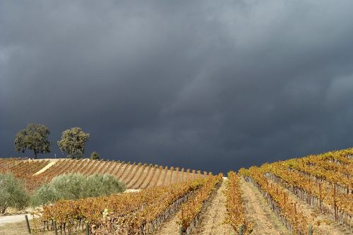 November Storm Gathering over Tablas Creek