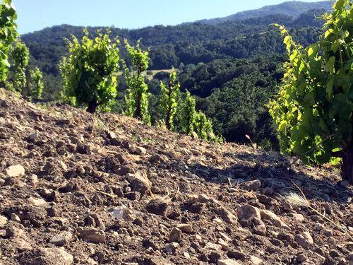 Scruffy soil view