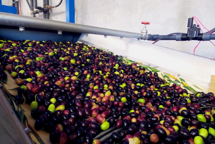 Olives Rolling