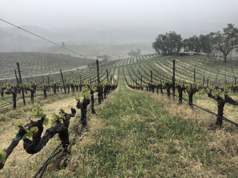 Misty April 2017