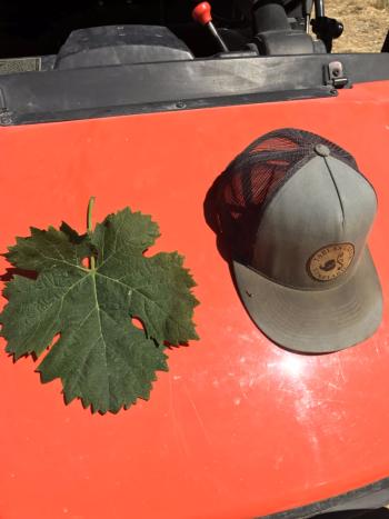 Jordy Vermentino Leaf