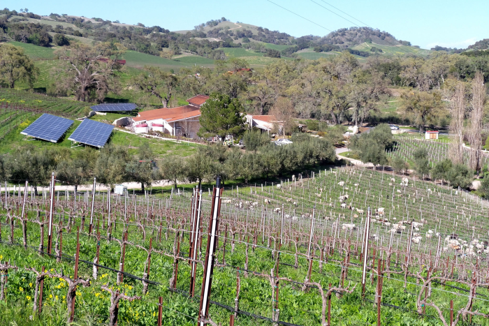 Winery  animals and solar panels