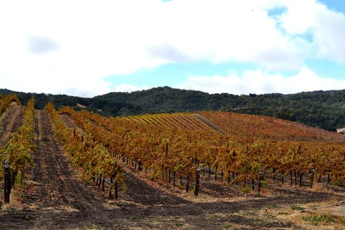 Over Roussanne