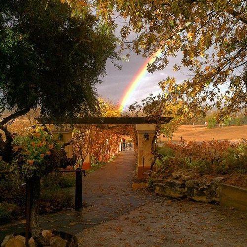 Castoro rainbow