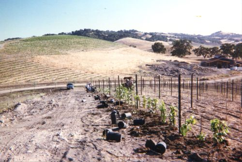 Planting Chardonnay and Building Winery