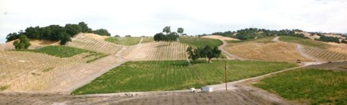 Vineyard Panorama 1995