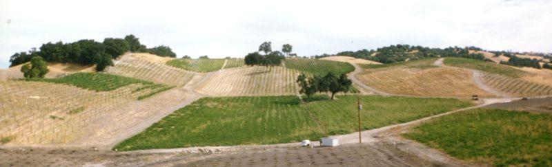 Vineyard Panorama 1995