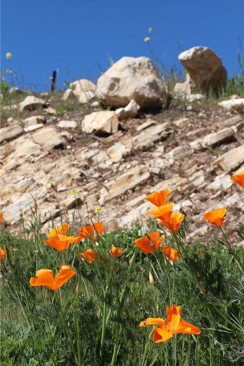 0660f33374 Poppies limestone and deep blue sky