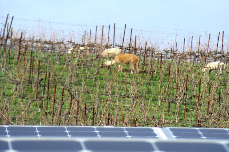Animals behind solar