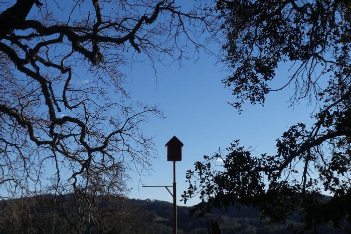 Owl box and oak trees