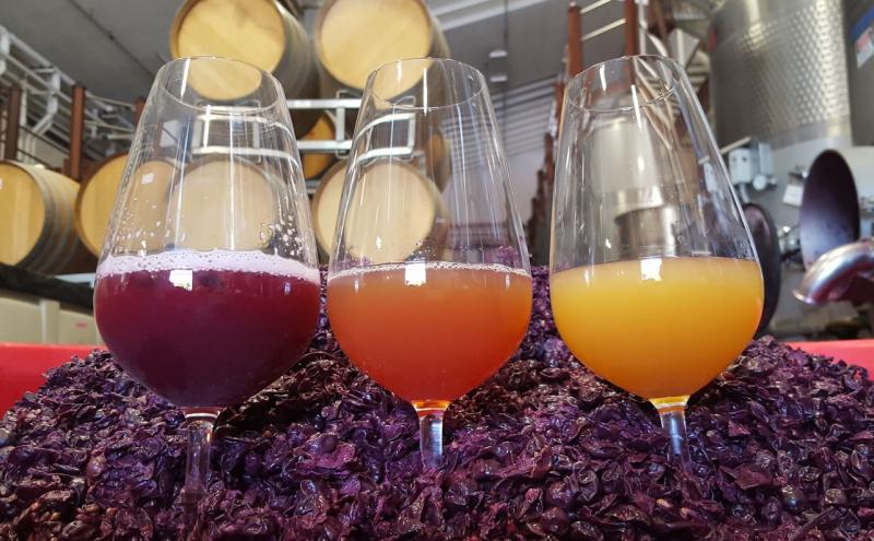 Three colors of grenache