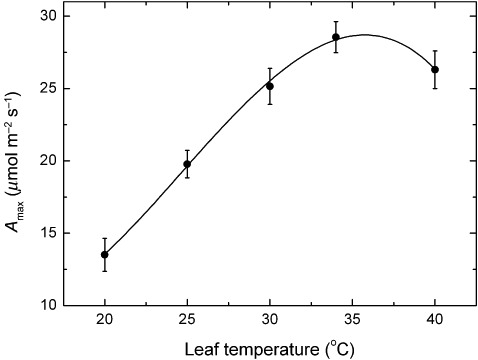 Figure-7-CO2-saturated-maximum-rates-of-photosynthesis-meanSE-of-Semillon-leaves-as