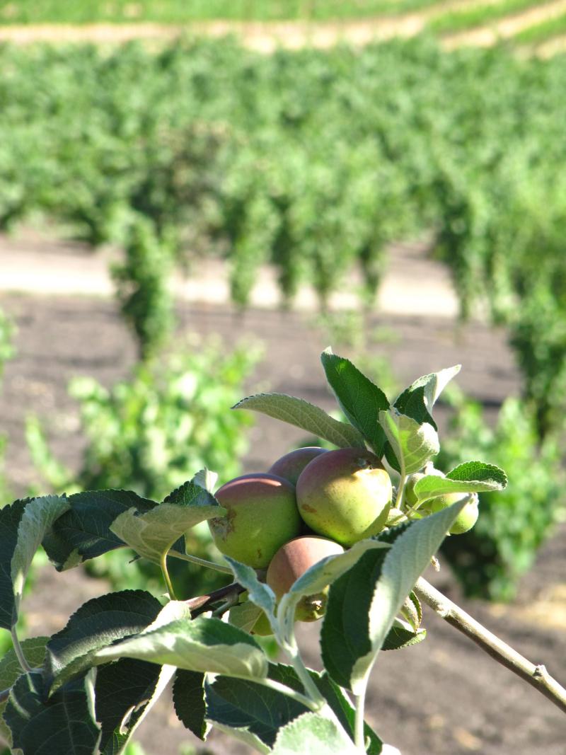 Orchard at Tablas Creek 2
