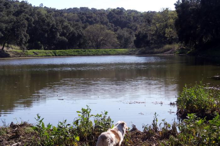 Lake Ramage