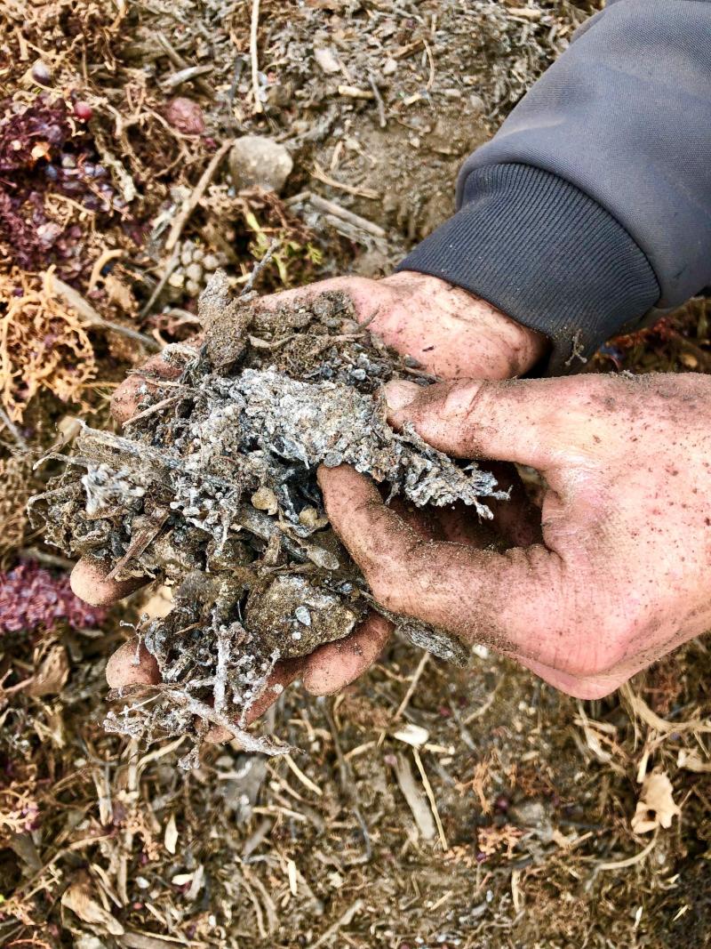 Jordy compost closeup
