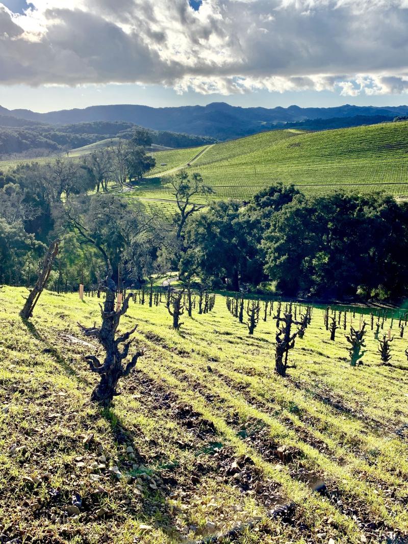 Green Tablas Creek Vineyard February 2019