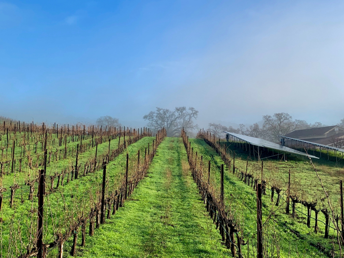 Solar panels and Mount Mourvedre