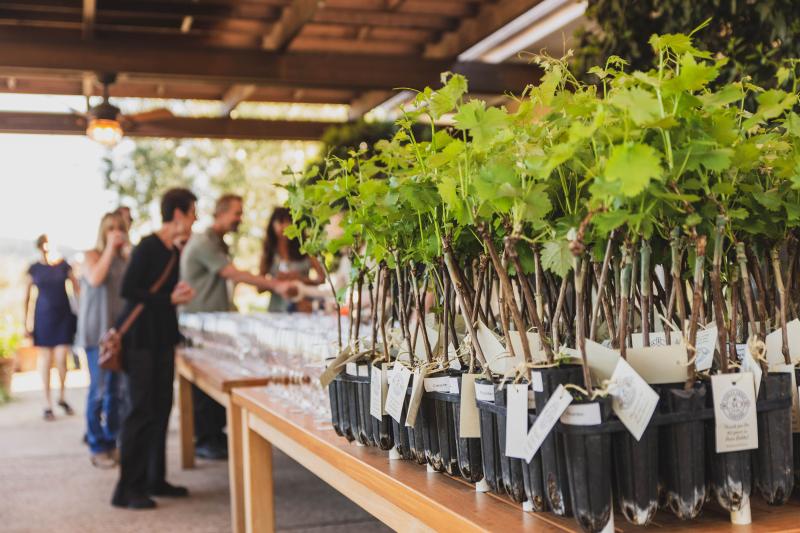Tablas Creek 30th Anniversary Party - Vines