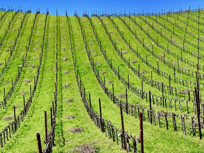 Tablas Creek Newly Pruned Vineyard Horizontal