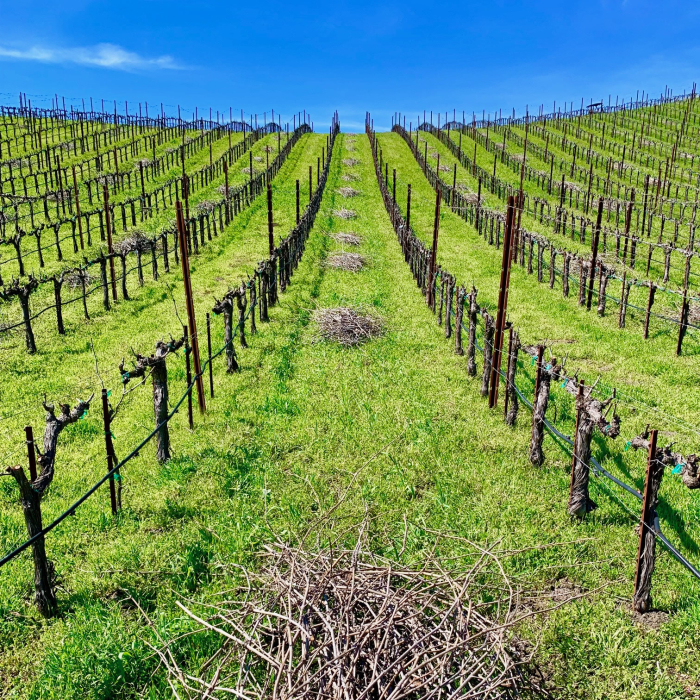 Tablas Creek Newly Pruned Vineyard Square