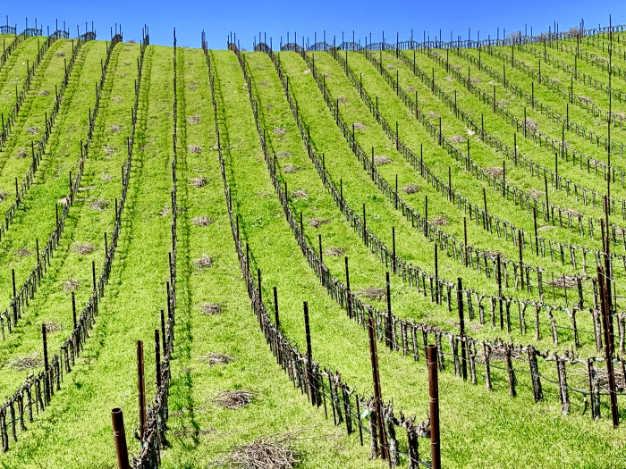Tablas Creek Vineyard  Newly Pruned
