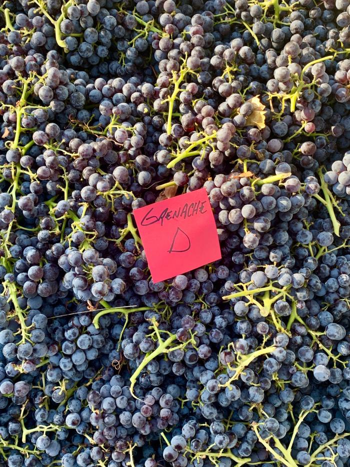Mid-Sept Harvest - Grenache D