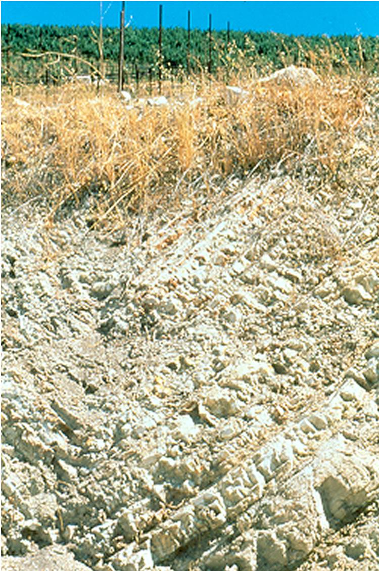 Tablas Creek - calcareous rock cut