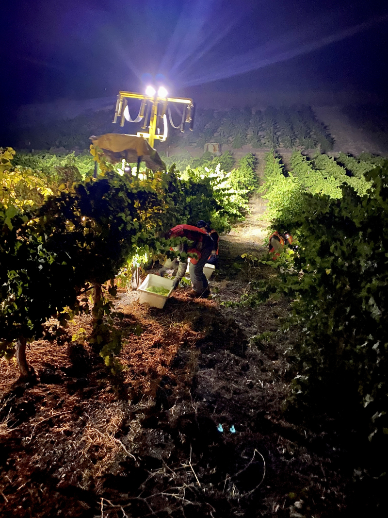 Night Harvest 2