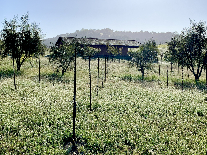 Green April 2021 - Straw Bale Barn