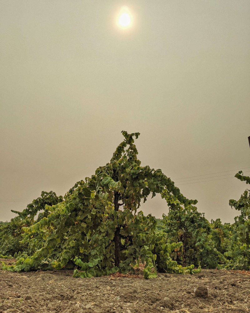 Smoky skies over Tannat