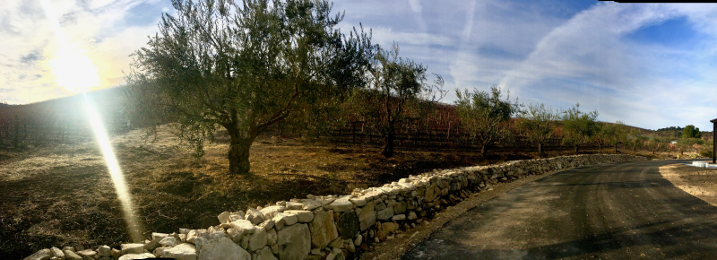 Seb - Panoramic with olive trees