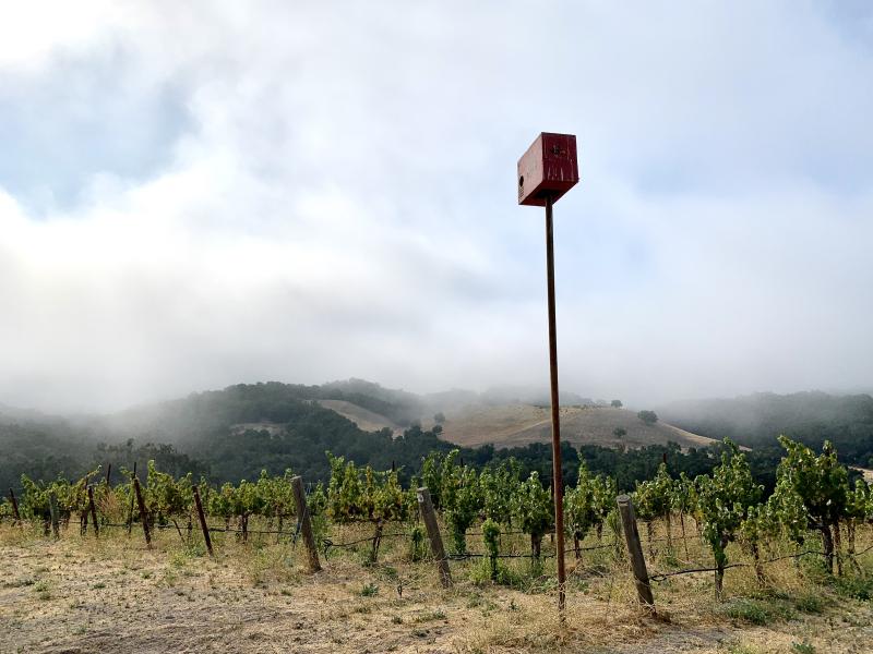 Owl box in harvest fog
