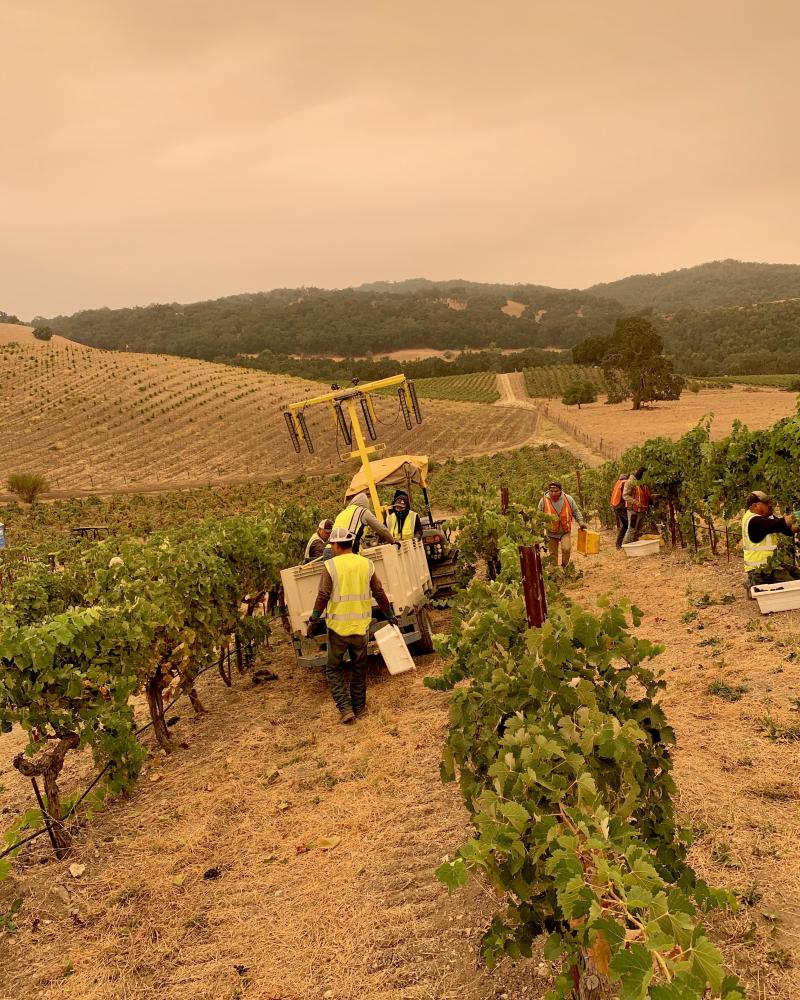 Harvest Apocalypse