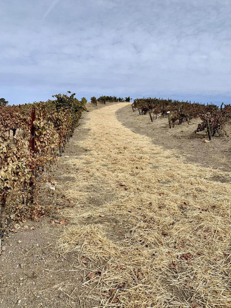 Straw on vineyard road