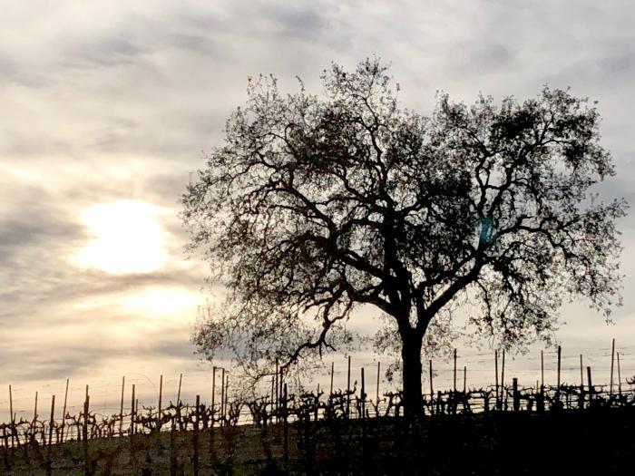 Eli - Oak tree in with winter clouds