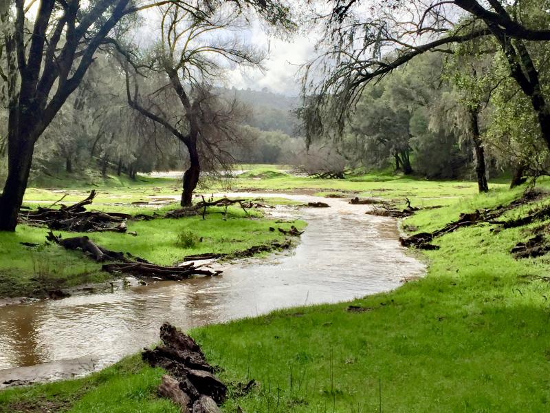 Las Tablas Creek Feb 2017