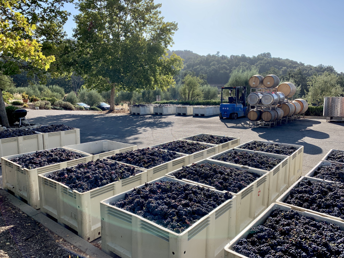 2021 Bins of Mourvedre