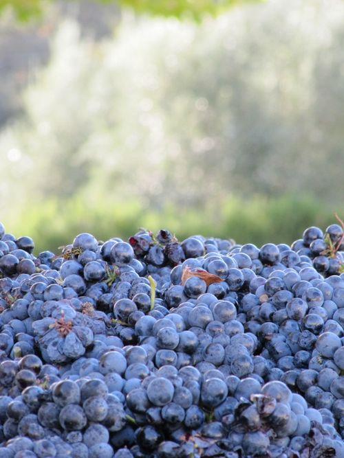 Harvest_Nov5_0001