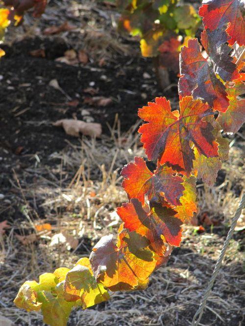 Harvest_Nov5_0003