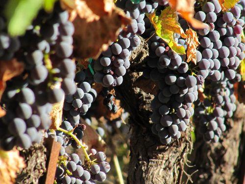 Harvest_Nov5_0004