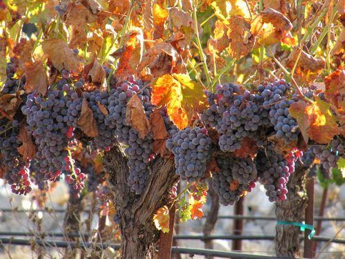 Harvest_Nov5_0005