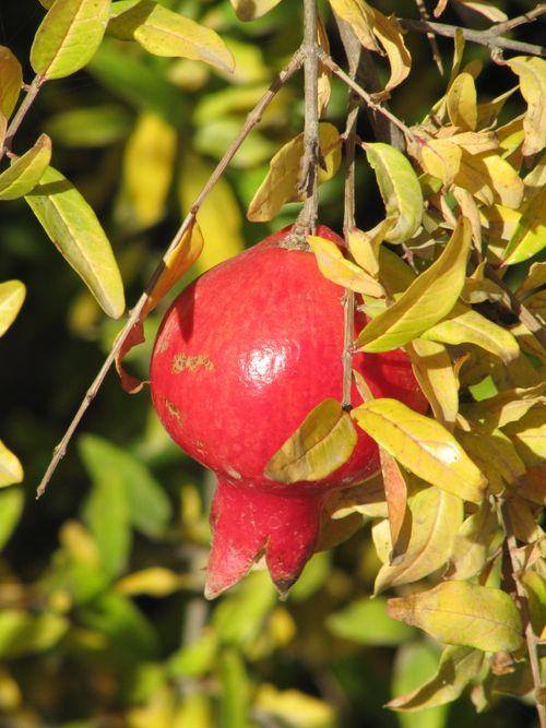 Harvest_Nov5_0006