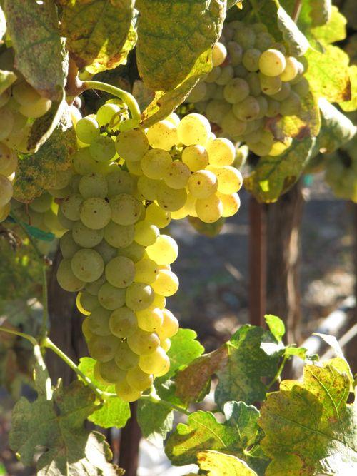 Harvest_oct26_0005