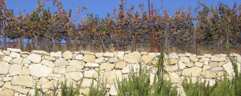 Mount_mourvedre