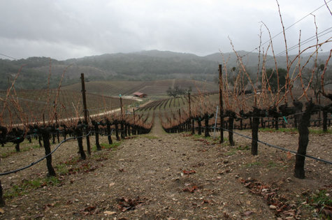 South_through_grenache